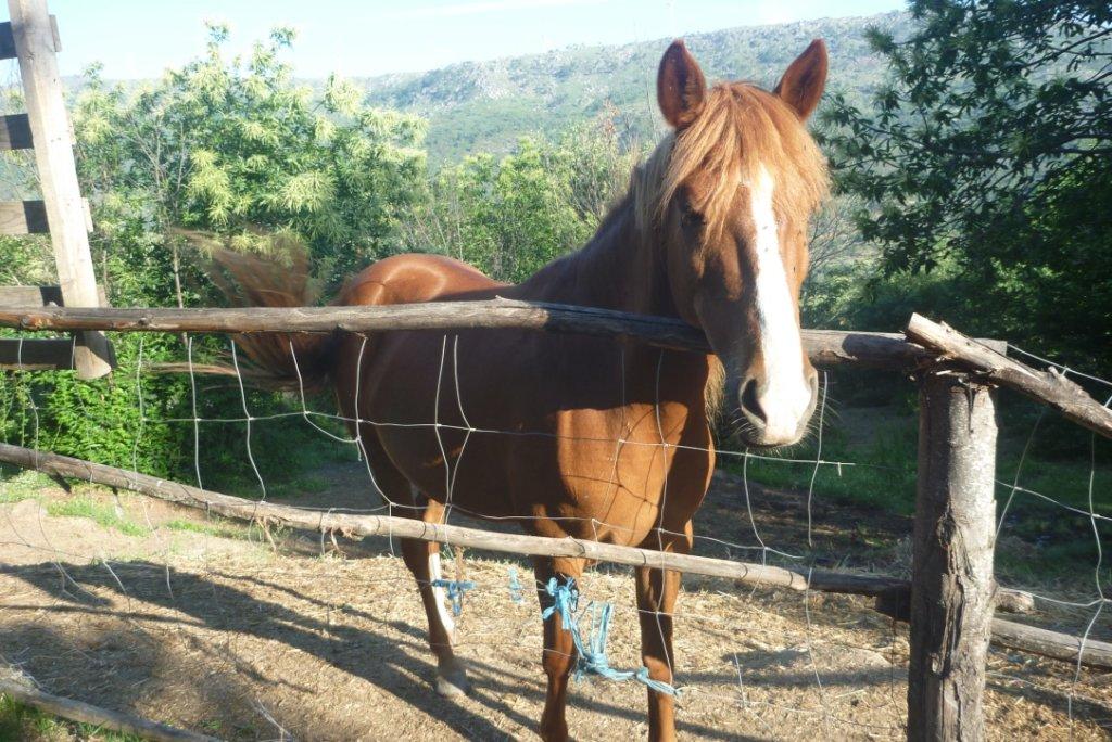 Koníci jsou mí noví spolubydlící